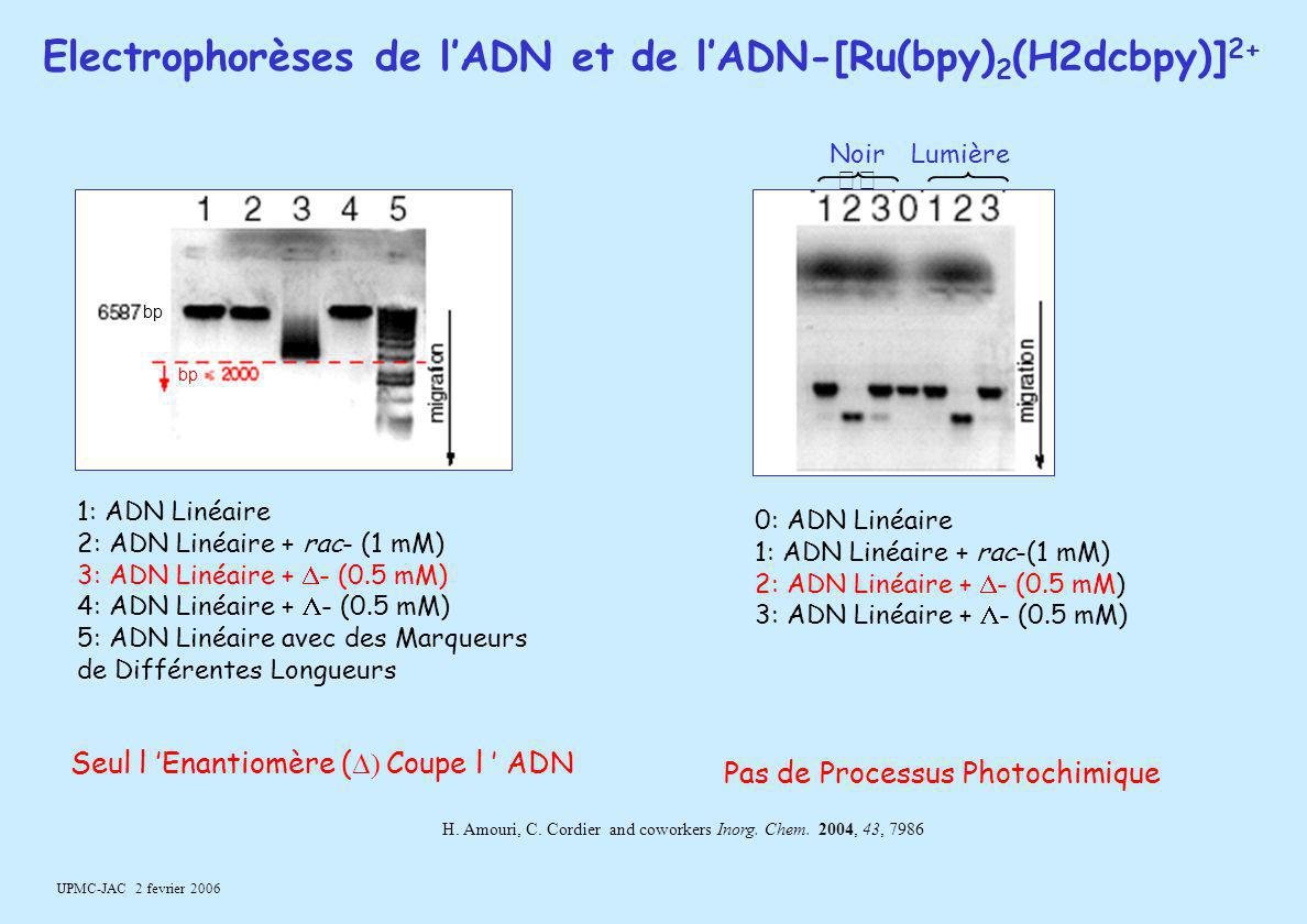 Electrophorèses de l'ADN et de l'ADN-[Ru(bpy)2(H2dcbpy)]2+